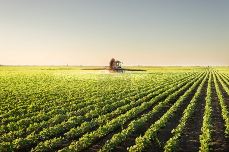 Photo for Tractor spraying pesticides on soybean - Royalty Free Image