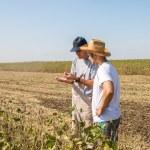 Young farmer in soybean fields...