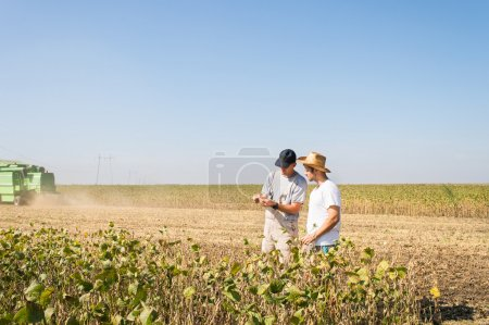 Photo for Young farmers in soybean fields - Royalty Free Image