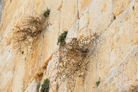 Birds Nest in the Western Wall