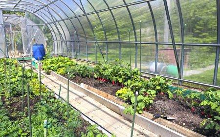 Photo pour Cultiver des légumes dans des serres en polycarbonate transparent - image libre de droit