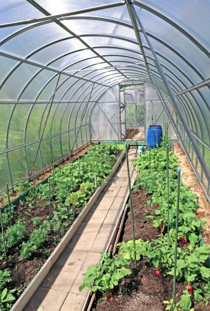 Photo for Growing vegetables in greenhouses made of transparent polycarbonate - Royalty Free Image