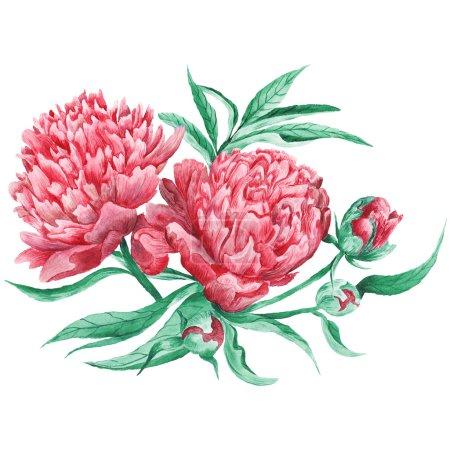 Peony Watercolor Botanical Illustration
