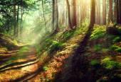 Scene misty old autumn forest