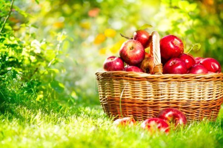 Apples in a Basket Outdoor