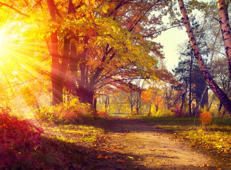 Photo for Fall. Autumnal Park. Autumn Trees and Leaves in sun light - Royalty Free Image