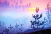 nature sunrise foggy landscape.