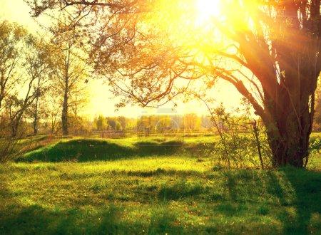 Naturaleza paisaje. Puesta de sol