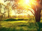 Nature landscape. Sunset