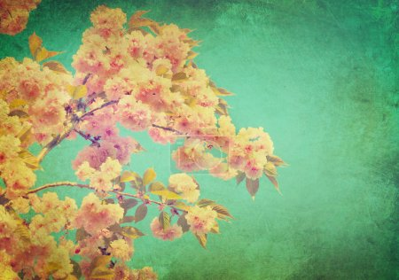 Spring sakura blossom  background.