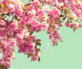 nature scene with blooming tree