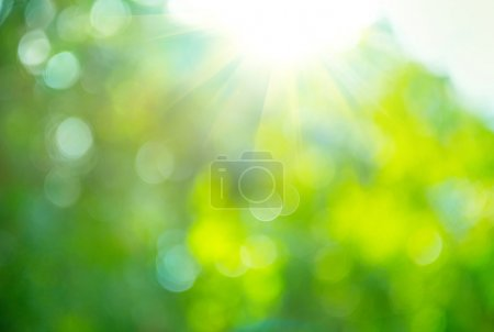 Photo for Beautiful Nature Blurred Background. Green Bokeh - Royalty Free Image