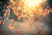 blooming tree and sun flare