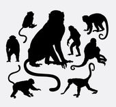 Monkey and ape animal silhouettes