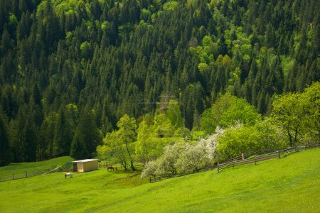 Beautiful rural landscape in the mountains. Pasture. Carpathian
