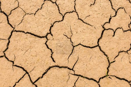 Dry and cracked soil earth textures. Close up.