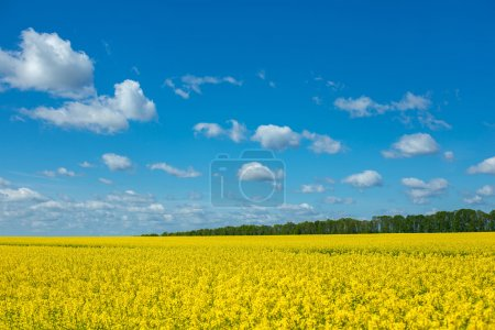 Incredibly beautiful landscape of flowering buckwh...