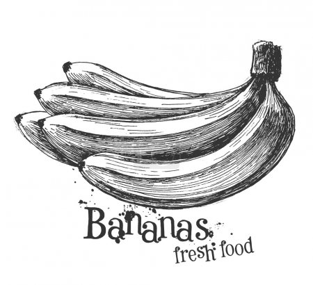 bananas on a white background. sketch