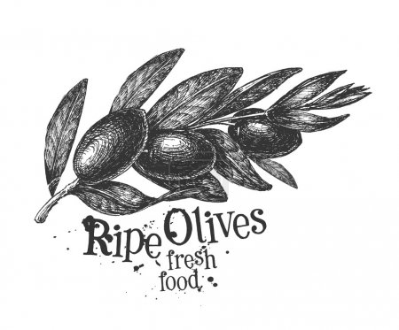 olives on a white background. sketch