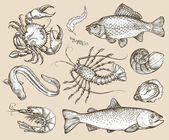 Hand drawn sketch set seafood Vector illustration