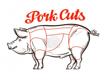 vector pork, pig chart. meat cuts or butcher shop