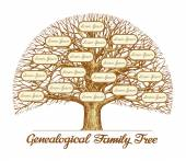 Vintage Genealogical Family Tree Leafless old oak tree Dynasty ancestry Hand drawn sketch vector illustration