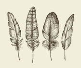 Hand drawn vintage bird feathers Sketch writing feather Vector illustration