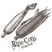 Ripe corn logo design template