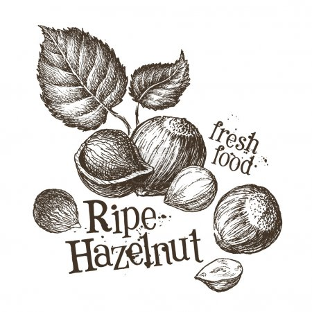 Ripe hazelnut, fresh walnut