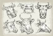 collection of hand-drawn cows vector illustration