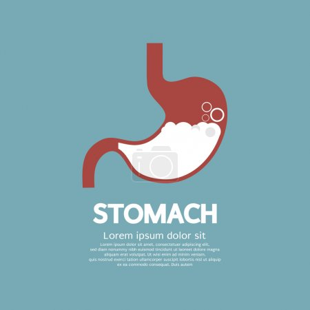 Flat Design Human's Stomach Graphic Vector Illustration