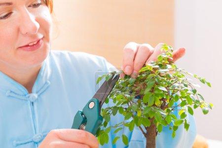 Woman trimming bonsai tree