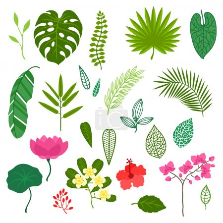 Illustration for Set of stylized tropical plants, leaves and flowers. - Royalty Free Image