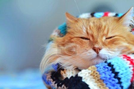 Foto de Divertido gato rojo en el acogedor ambiente de casa - Imagen libre de derechos