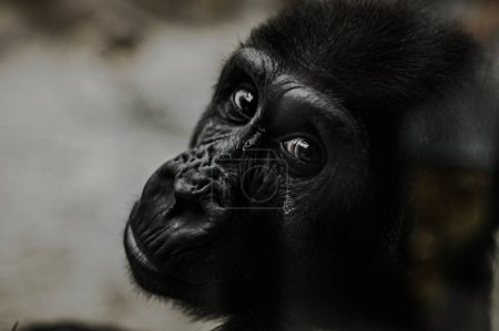 Just like humans, every gorilla has a different pe...