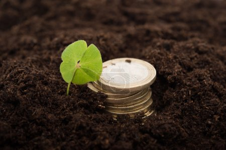Photo for Four leaf clover in soil near a pile of coins - Royalty Free Image