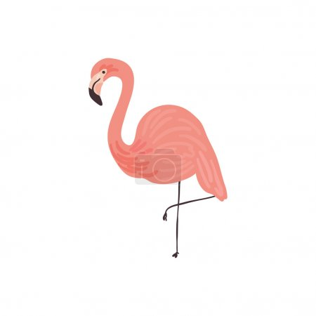 Vector hand drawn illustration of a Flamingo