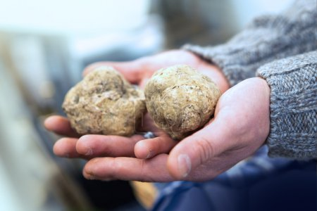 Big Italian white truffles