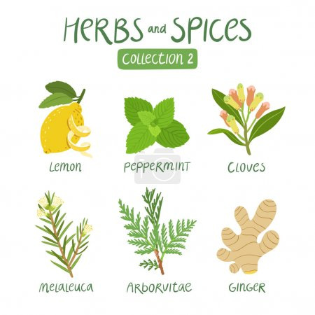 Illustration for Herbs and spices collection 2. For essential oils, ayurvedic medicine - Royalty Free Image