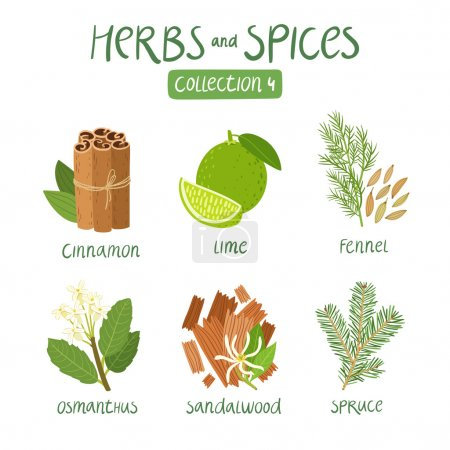 Illustration for Erbs and spices collection 4. For essential oils, ayurvedic medicine - Royalty Free Image