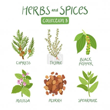 Illustration for Herbs and spices collection 3. For essential oils, ayurvedic medicine - Royalty Free Image
