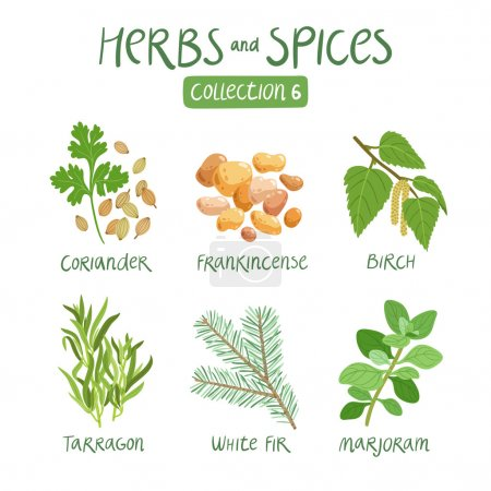 Illustration for Herbs and spices collection 6. For essential oils, ayurvedic medicine - Royalty Free Image