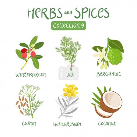 Illustration for Herbs and spices collection 9. For essential oils, ayurvedic medicine - Royalty Free Image