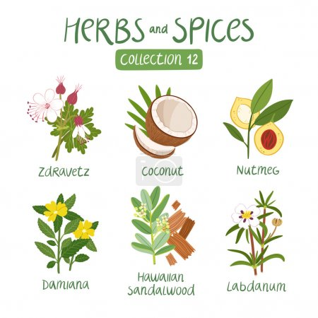 Illustration for Herbs and spices collection 12. For essential oils, ayurvedic medicine - Royalty Free Image