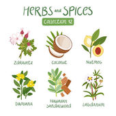 Herbs and spices collection 12