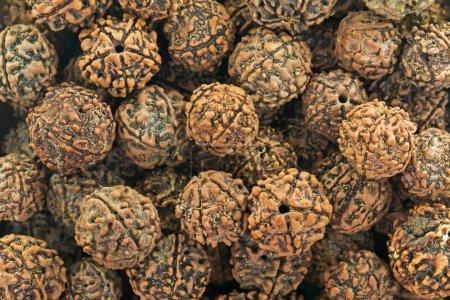 Photo pour Gros plan texture de fond photo de Rudraksha, graines de fruits de Elaeocarpus Ganitrus Roxb arbre. Représentant la déchirure de l'accomplissement versé par Shiva une fois qu'il est sorti d'une longue période de méditation yogique, les graines effrayées sont utilisées comme perles de prière - image libre de droit