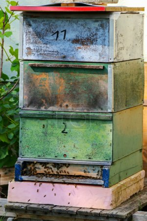 Honey Bees swarming near wooden beehive boxes
