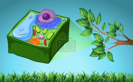 Illustration for Plant cell and green leaf illustration - Royalty Free Image