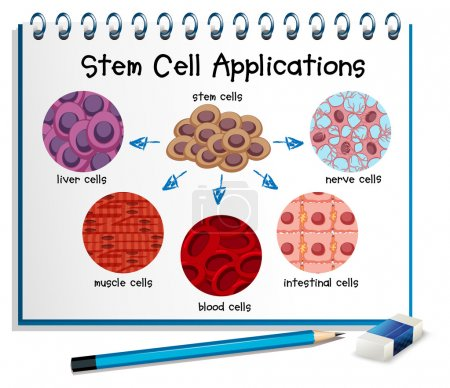 Illustration for Diagram showing different stem cell applications illustration - Royalty Free Image