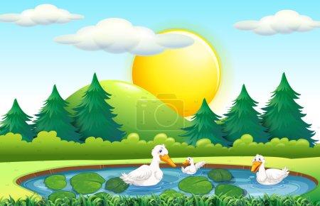 Three ducks in the pond